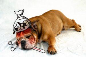 風邪で苦しむ犬