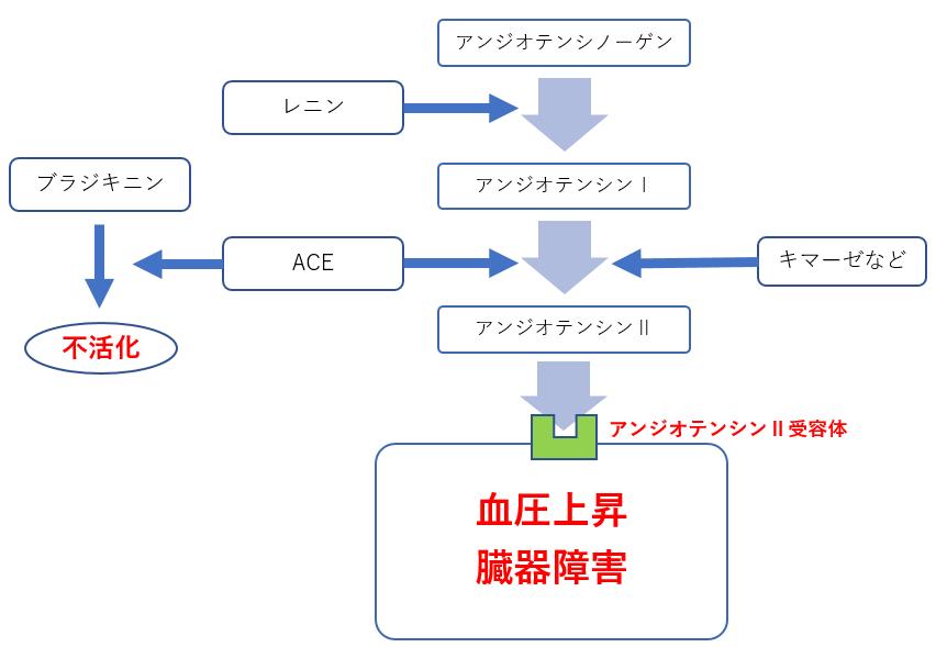 ARB・ACE阻害薬の作用機序の画像